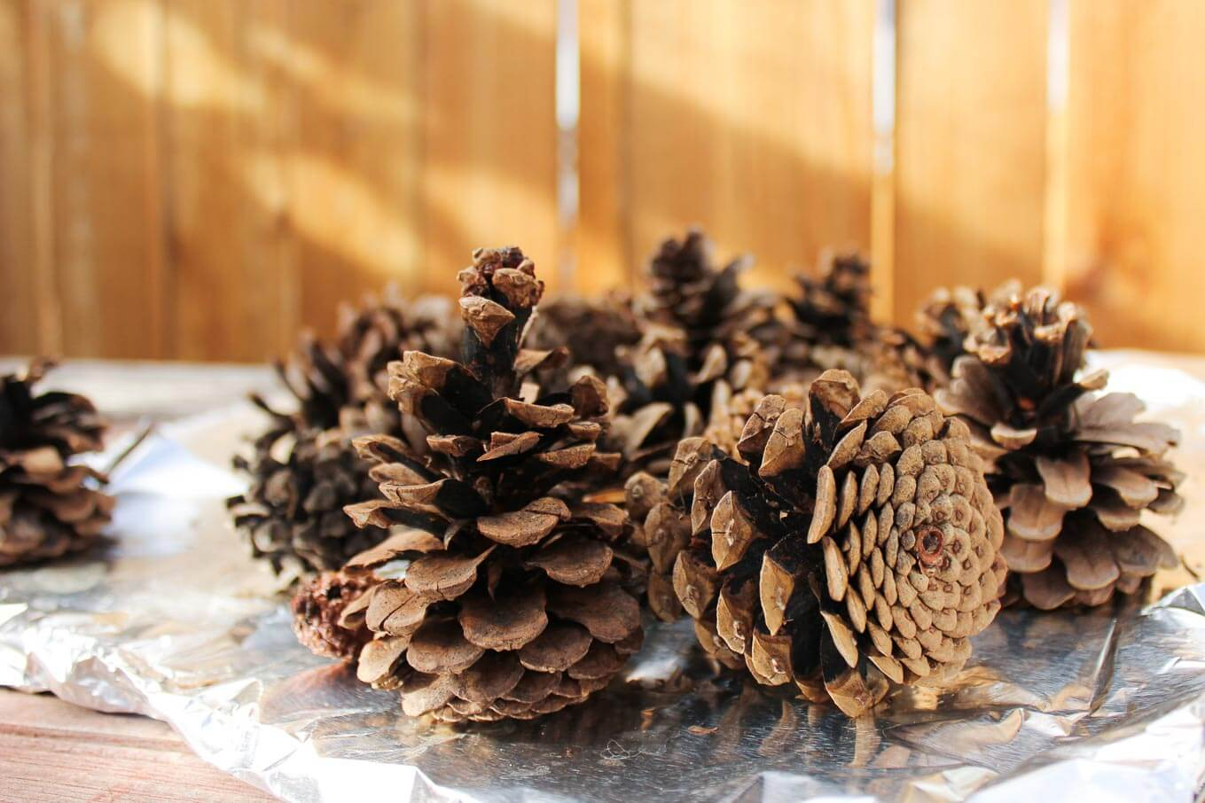Learn how to de-bug, disinfect and clean pine cones for craft projects by simply using vinegar and your oven. Also, learn how to make pine cones open (or bloom) for even more crafty potential. Click to see full tutorial. | MakeAndDoCrew.com