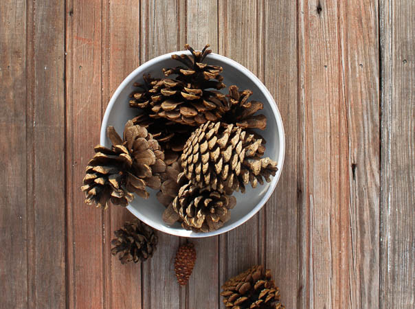 How To Clean Pine Cones for Crafts–See Ya Bugs!